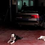 Poesía para cansadas, 3. Marcos Díez, o el extraño parecido entre la vida y un taller mecánico